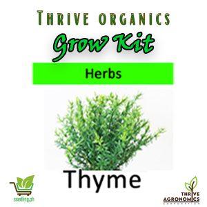 thyme grow kit