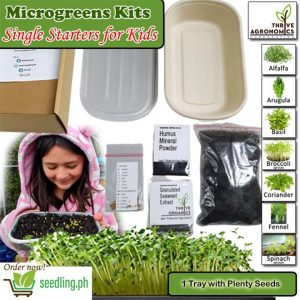 Microgreen kits kids