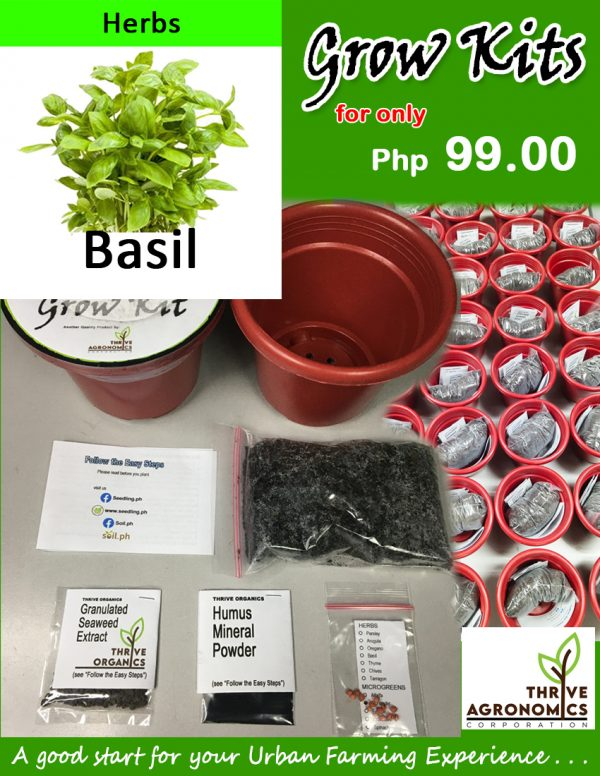 basil grow kit