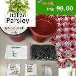 italian parsley grow kit