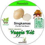 singkamas top cover